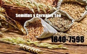Semillas y Cereales Teo